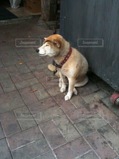犬の写真・画像素材[286517]