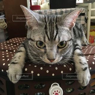 テーブルの上に横たわる猫の写真・画像素材[748784]