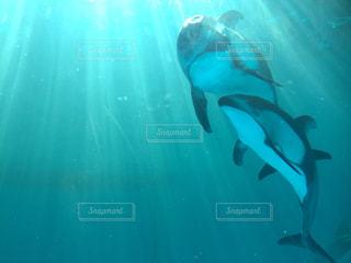 イルカの写真・画像素材[287212]