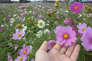 植物にピンクの花の写真・画像素材[889602]