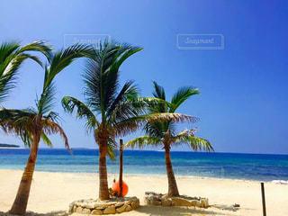 ヤシの木とビーチ - No.1119014