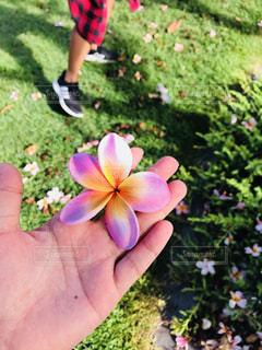 花を持っている人 - No.1202352