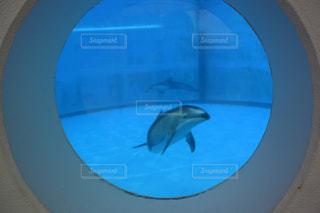 青いプールの水 - No.1202781