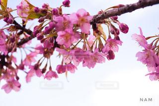 春の写真・画像素材[401606]