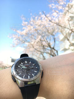 春,桜,時計