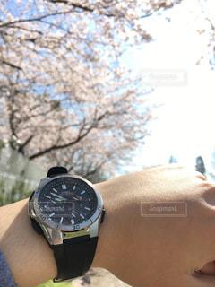 空,桜,時計