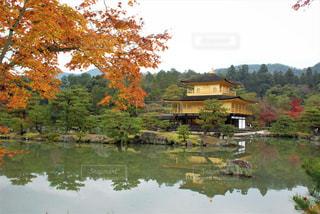 秋,紅葉,京都,金閣寺