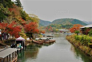 秋,紅葉,京都,嵐山