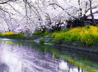 愛知県,五条川,岩倉