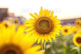 近くの花のアップの写真・画像素材[1198126]