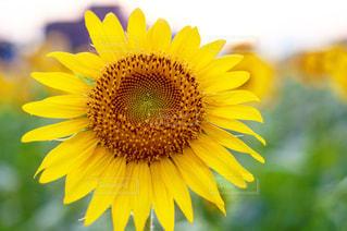 近くの花のアップの写真・画像素材[1198136]