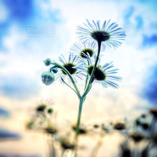 近くの花のアップの写真・画像素材[1369629]