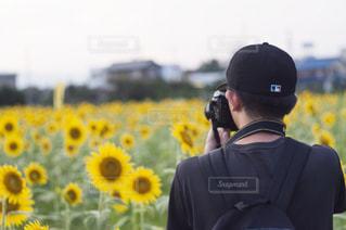 男,男子,向日葵,カメラマン,岐阜,自身