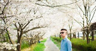春,桜,お花見,旅行,歩道,岐阜県,身分