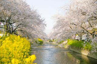 春,桜,お花見,旅行