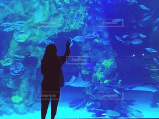 女性,後ろ姿,水族館,女,背中,韓国,ソウル
