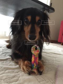 No.287622 犬