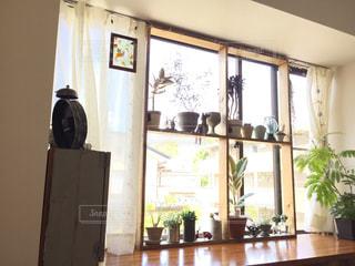 インテリア,植物,窓,カーテン,DIY,雑貨,観葉植物,ナチュラル,グリーン,多肉植物,ゴムの木,出窓,鉢,ボタニカル,ハオルチア,interior,インテリアグリーン,エバーフレッシュ,室内グリーン