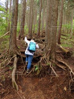 森の木の隣に立っている人の写真・画像素材[2225864]