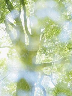 光り輝く新緑の写真・画像素材[4409935]
