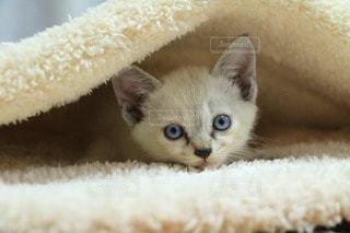 猫の写真・画像素材[15093]