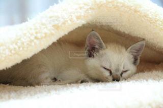 猫の写真・画像素材[243443]