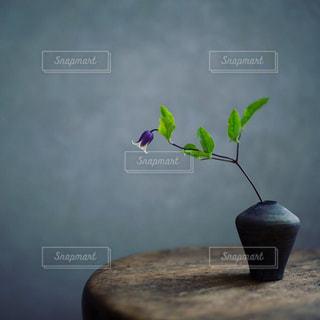 花の写真・画像素材[2151694]