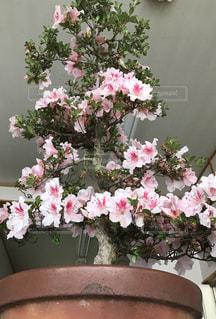花の写真・画像素材[564677]