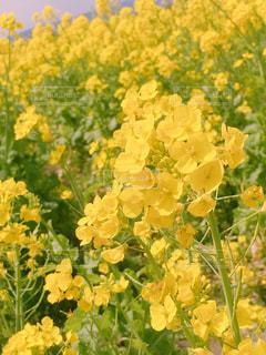 緑の葉と黄色の花の写真・画像素材[1134685]