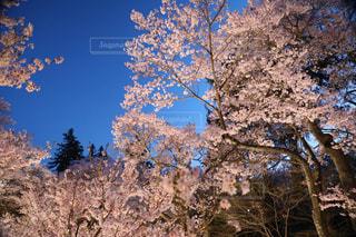 フォレスト内のツリー - No.1124055