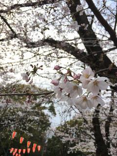 春 - No.412656