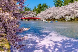 春の写真・画像素材[407489]
