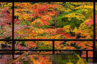 秋,紅葉,京都,反射,瑠璃光院
