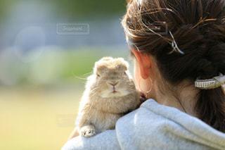 動物,うさぎ,かわいい,ふわふわ,ペット,兎,癒し,うさんぽ,お散歩,Cute,ふわもこ,ツーショット
