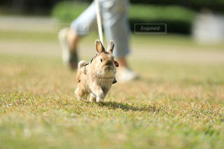 動物の写真・画像素材[458865]