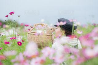 近くの花のアップ - No.893079
