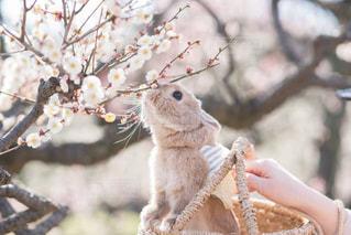 枝の上のリスの写真・画像素材[3045952]