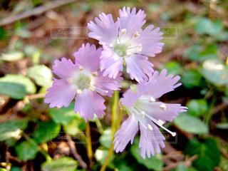 近くの花のアップの写真・画像素材[1122768]