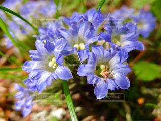 近くの花のアップの写真・画像素材[1148101]