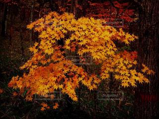フォレスト内のツリーの写真・画像素材[1612383]