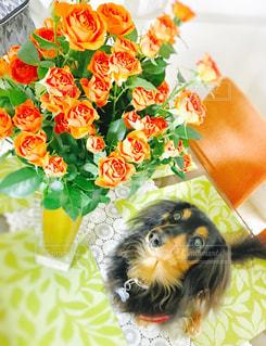 犬の写真・画像素材[292615]