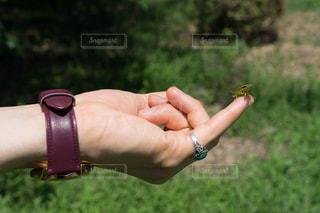 虫取り,ポートレート,一眼,バッタ,一眼カメラ,虫捕り,虫とり