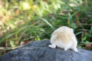 岩の上に座っている小さな白い鳥の写真・画像素材[744123]