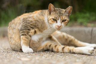 地面に横になっている猫の写真・画像素材[1254855]