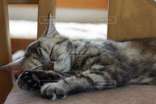 木製の表面の上に横たわる猫の写真・画像素材[1254883]