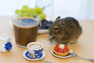 コーヒー カップの横に座っている猫の写真・画像素材[1484456]
