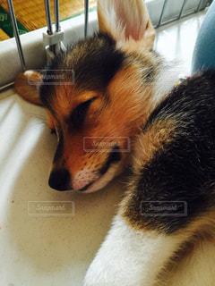 犬の写真・画像素材[292402]