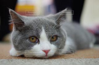 猫の写真・画像素材[292560]