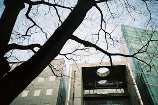 建物の前にツリーの写真・画像素材[732781]