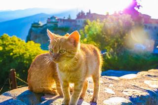 テーブルの上に座ってオレンジ色の猫の写真・画像素材[946315]
